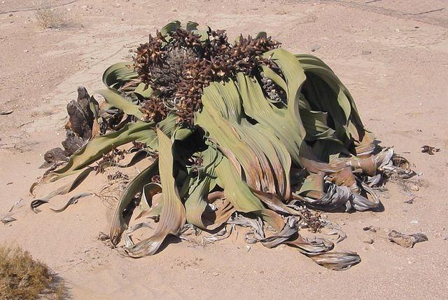 Las plantas más raras del mundo